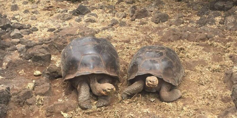 The Best Things to do in Isabela Galapagos