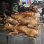 Rumor dispelled: Dog is commonly eaten in Vietnam,