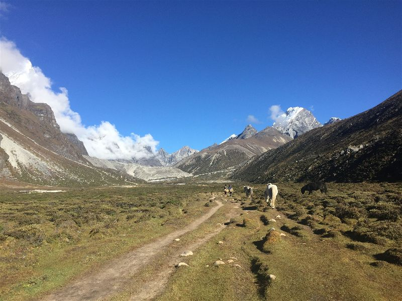 Wandering with Himalayan Mustangs on the Everest Base Camp Hike from Pheriche to Dobuche