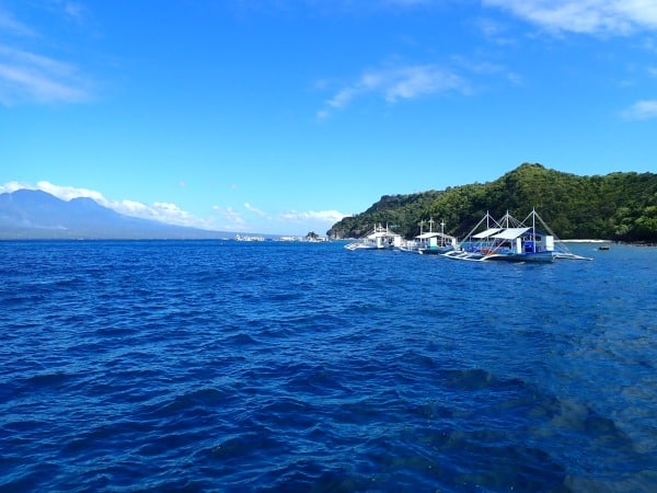 Diving Apo Island - Freediving the Philippines