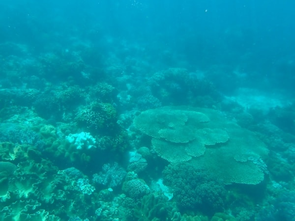 Apo Island Diving - Freediving the Philippines