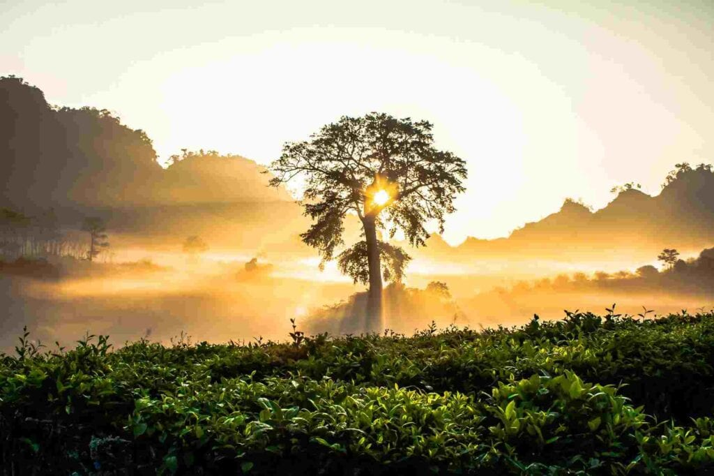 Best Time Of Year To Visit Sri Lanka: When To Go, Monsoon Season, Weather, And More