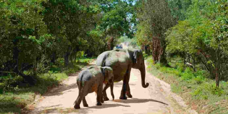 The 6 Best Sri Lanka Safari Tours | Elephants, Leopards, and Other Wildlife On The Pearl Of the Indian Ocean